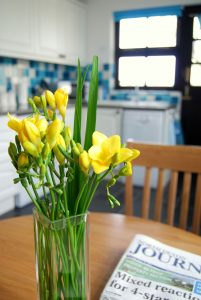 Daffodils at The Long Linhay, Mortehoe, North Devon